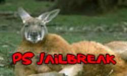 image kangourou